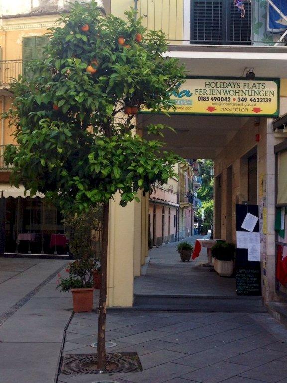 Giada, Монелья