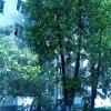 Апартаменты на улице Братьев Кадомцевых 6, фото 20