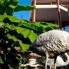 Гостевой дом Фламинго Н, фото 25