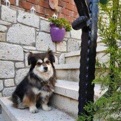Apaz Butik Hotel Чешме с домашними животными