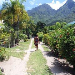Отель Fare Edith Французская Полинезия, Муреа - отзывы, цены и фото номеров - забронировать отель Fare Edith онлайн приотельная территория