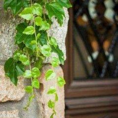 Отель Oreiades Guesthouse Ситония фото 9