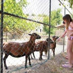 Отель Pinepark Holiday Club с домашними животными