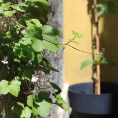 Grapes & Bites - Hostel And Wines Лиссабон фото 4