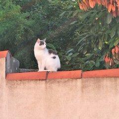 Hotel Casa Del Pellegrino Падуя с домашними животными