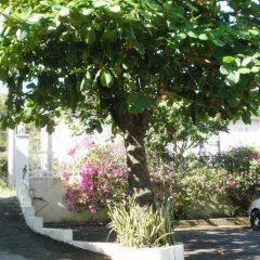 Pineapple Court Hotel фото 5