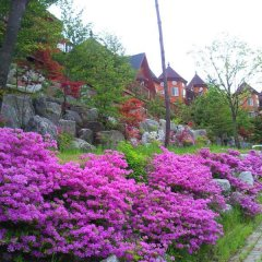 Отель Elf Pension Южная Корея, Пхёнчан - отзывы, цены и фото номеров - забронировать отель Elf Pension онлайн фото 9