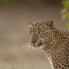 Отель Yala Safari Camping Шри-Ланка, Катарагама - отзывы, цены и фото номеров - забронировать отель Yala Safari Camping онлайн интерьер отеля фото 2