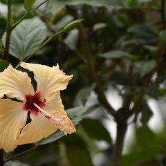 Отель Club Fiji Resort фото 15
