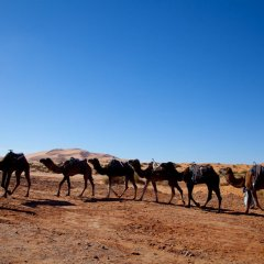 Отель Kam Kam Dunes Марокко, Мерзуга - отзывы, цены и фото номеров - забронировать отель Kam Kam Dunes онлайн с домашними животными