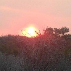 Отель Addo Wildlife Южная Африка, Аддо - отзывы, цены и фото номеров - забронировать отель Addo Wildlife онлайн приотельная территория фото 2