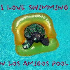 Los Amigos Hostel бассейн фото 3