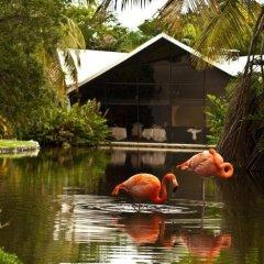 Отель Bavaro Princess All Suites Resort Spa & Casino All Inclusive фото 4