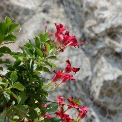 Отель Villa Adriana Amalfi Италия, Амальфи - отзывы, цены и фото номеров - забронировать отель Villa Adriana Amalfi онлайн фото 3
