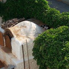 Отель Pizania Греция, Калимнос - отзывы, цены и фото номеров - забронировать отель Pizania онлайн фото 9