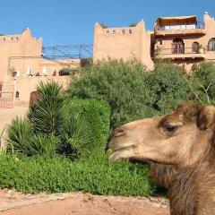 Отель Kasbah Le Mirage с домашними животными