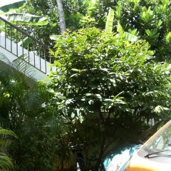 Отель Baywatch Шри-Ланка, Унаватуна - отзывы, цены и фото номеров - забронировать отель Baywatch онлайн фото 2