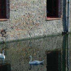 Отель Ter Brughe Бельгия, Брюгге - 5 отзывов об отеле, цены и фото номеров - забронировать отель Ter Brughe онлайн с домашними животными
