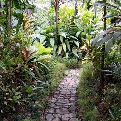 Отель Colo-I-Suva Rainforest Eco Resort Вити-Леву фото 11