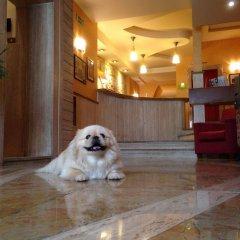 Отель Posta Италия, Палермо - отзывы, цены и фото номеров - забронировать отель Posta онлайн с домашними животными