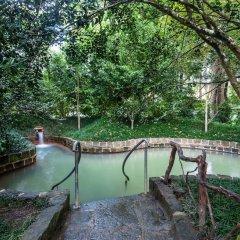 Terra Nostra Garden Hotel бассейн фото 2