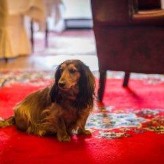 Отель Firean Бельгия, Антверпен - отзывы, цены и фото номеров - забронировать отель Firean онлайн с домашними животными