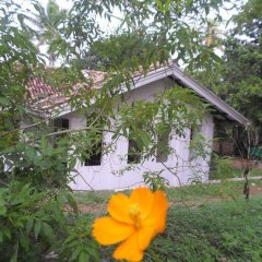 Отель Chitra Ayurveda Hotel Шри-Ланка, Бентота - отзывы, цены и фото номеров - забронировать отель Chitra Ayurveda Hotel онлайн фото 2