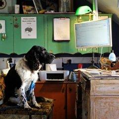 Отель Hostel Malti Мальта, Сан Джулианс - отзывы, цены и фото номеров - забронировать отель Hostel Malti онлайн с домашними животными