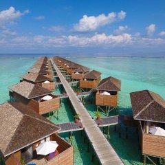 Отель Meeru Island Resort & Spa Мальдивы, Остров Фуранафуши - 10 отзывов об отеле, цены и фото номеров - забронировать отель Meeru Island Resort & Spa онлайн бассейн