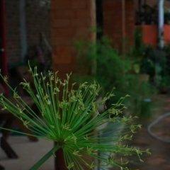 Отель Baan Por Jai Таиланд, Ланта - отзывы, цены и фото номеров - забронировать отель Baan Por Jai онлайн фото 11