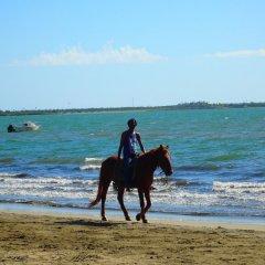Отель Bamboo Backpackers Фиджи, Вити-Леву - отзывы, цены и фото номеров - забронировать отель Bamboo Backpackers онлайн с домашними животными