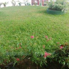 Отель Mahi Villa Шри-Ланка, Бентота - отзывы, цены и фото номеров - забронировать отель Mahi Villa онлайн фото 3