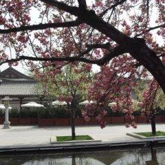 Отель Tangzonglong Hotel (Xi'an Qujiang Big Wild Goose Pagoda North Square Music Fountain) Китай, Сиань - отзывы, цены и фото номеров - забронировать отель Tangzonglong Hotel (Xi'an Qujiang Big Wild Goose Pagoda North Square Music Fountain) онлайн приотельная территория