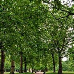 Отель Hilton Green Park Лондон приотельная территория