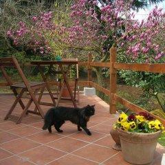 Отель Olive Tree Hill Италия, Дзагароло - отзывы, цены и фото номеров - забронировать отель Olive Tree Hill онлайн фото 2