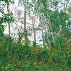 Отель Nha Nghi Tung Lam Далат фото 3