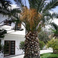 Mastorakis Hotel And Studios фото 10