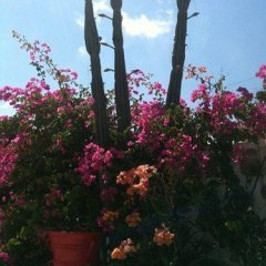 Sun of Mykonos Studios in Ornos, Greece from 132$, photos, reviews - zenhotels.com photo 7