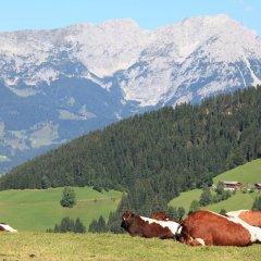 Отель Manorhaus Австрия, Зёлль - отзывы, цены и фото номеров - забронировать отель Manorhaus онлайн