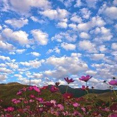 Отель Flower Garden Япония, Минамиогуни - отзывы, цены и фото номеров - забронировать отель Flower Garden онлайн фото 2