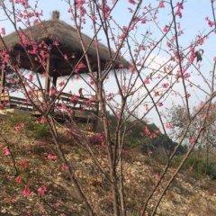Отель Fogang Hemingzhou Sakura Hot Spring Resort фото 4