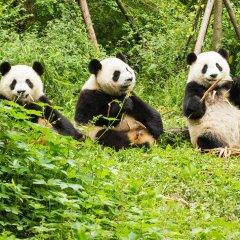 Отель Motel 168 Chengdu ShuangQiao Road Inn Китай, Чэнду - отзывы, цены и фото номеров - забронировать отель Motel 168 Chengdu ShuangQiao Road Inn онлайн с домашними животными