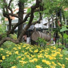 Отель Beachwood Villas фото 11