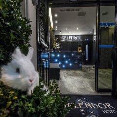 Hotel Splendor Elysees с домашними животными