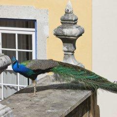 Отель Solar Do Castelo, a Lisbon Heritage Collection в номере фото 2