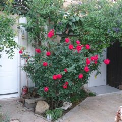 Allenby 2 Bed and Breakfast Израиль, Иерусалим - отзывы, цены и фото номеров - забронировать отель Allenby 2 Bed and Breakfast онлайн фото 9