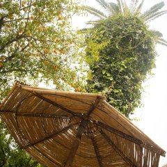 Villa Les Palmes in Tunis, Tunisia from 65$, photos, reviews - zenhotels.com photo 5