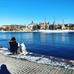 Dockside Hostel Old Town Стокгольм пляж
