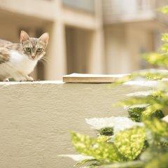 Отель Gatto Perso Luxury Apartments Греция, Салоники - отзывы, цены и фото номеров - забронировать отель Gatto Perso Luxury Apartments онлайн с домашними животными