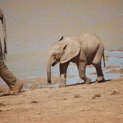 Отель Gorah Elephant Camp пляж